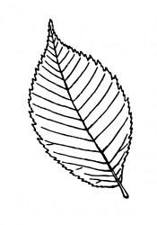 leaf outline clipart illustration domain