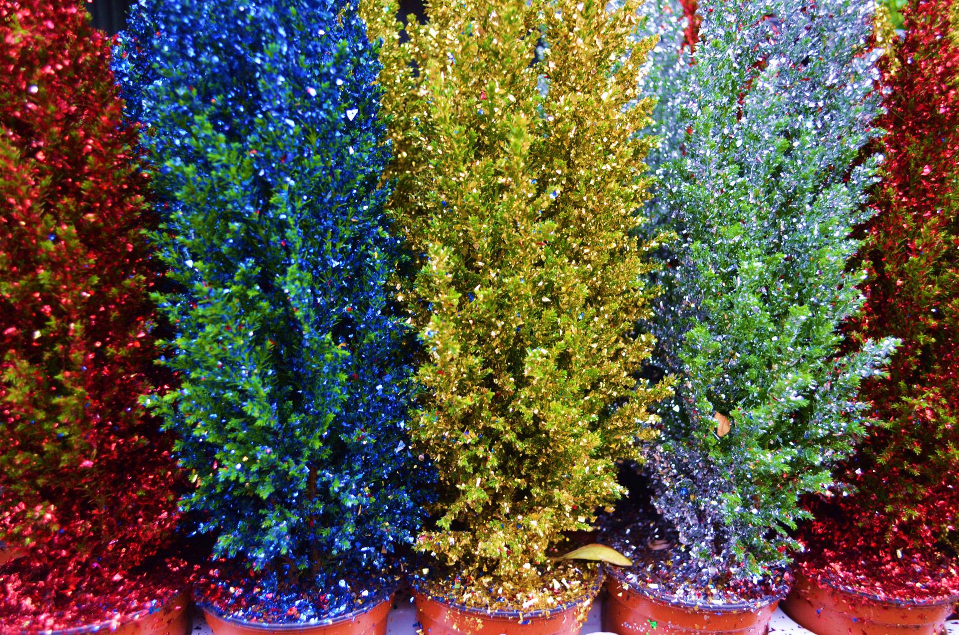 Colorful Christmas Trees Free Stock Photo Public Domain