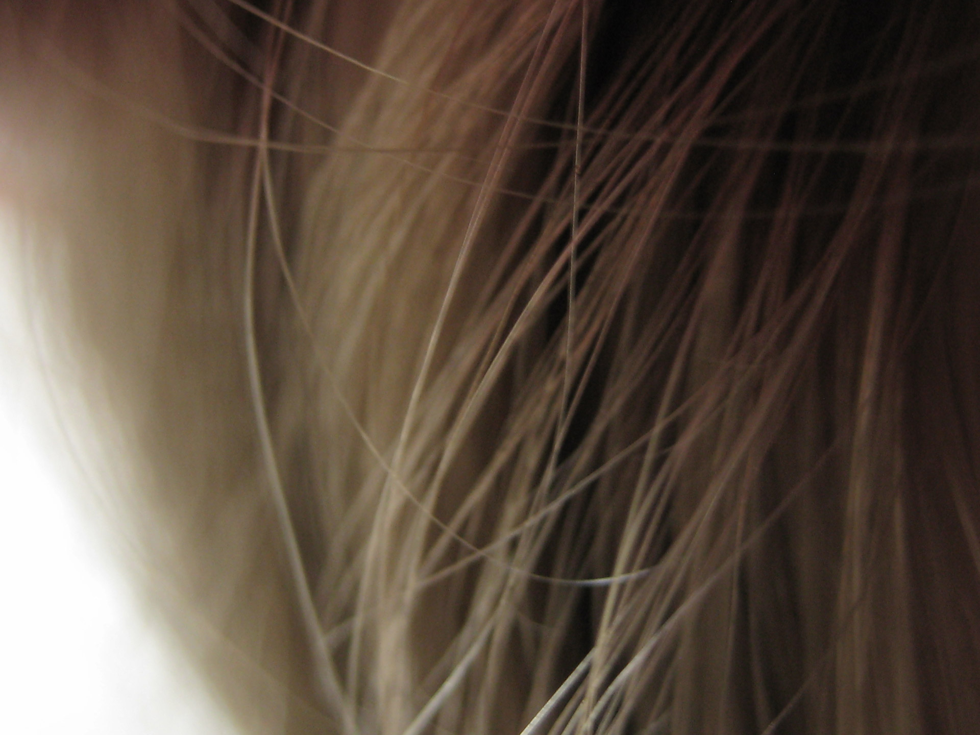 Light Long Hair Texture Free Stock Photo Public Domain