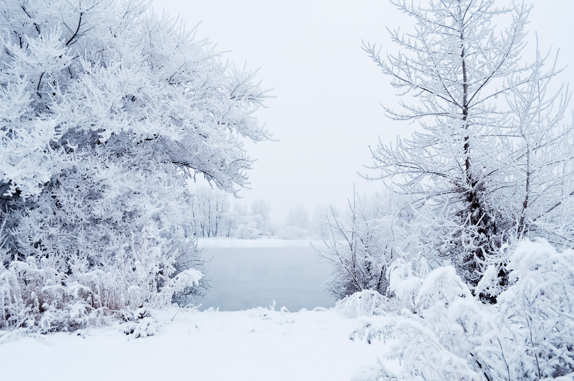 Wallpaper Phone Falling Snowflakes This Winter Free Stock Photo Public Domain Pictures
