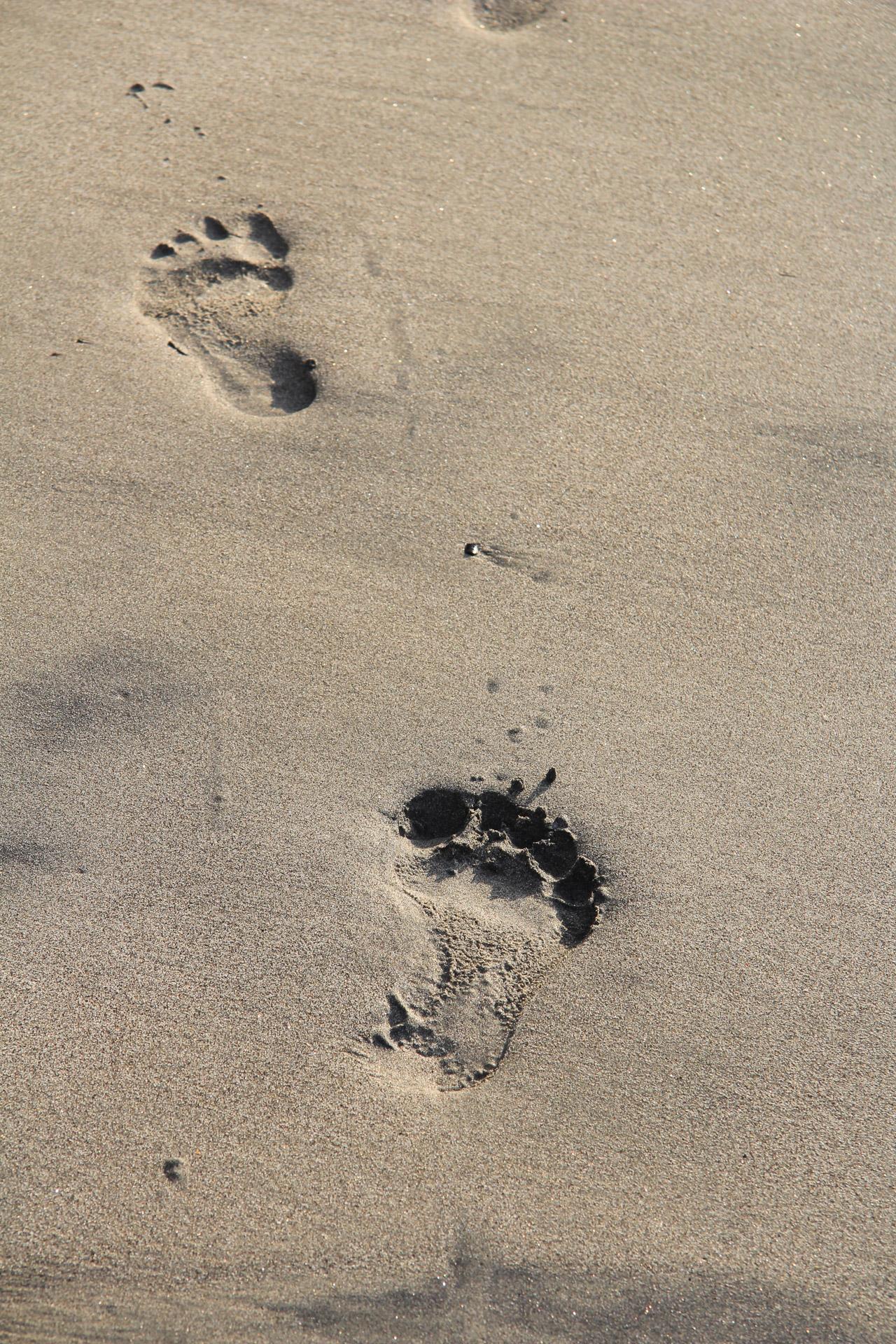 Trace De Pas Dans Le Sable : trace, sable, Traces, Sable, Photo, Stock, Libre, Public, Domain, Pictures