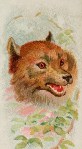 Kepala serigala  Domain publik vektor