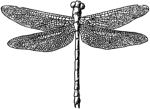 Ilustración de vector de libélula