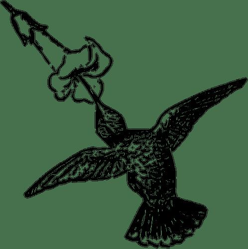 humming bird feeding flower