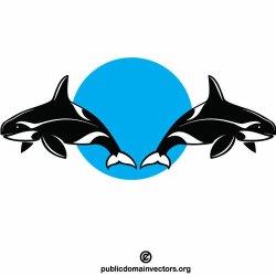 Orca killer whales Public domain vectors