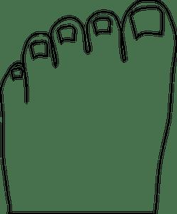 Gambar Mewarnai Kaki : gambar, mewarnai, Anatomy, Clipart, Public, Domain, Vectors