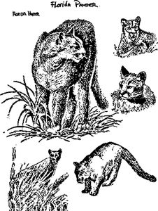 Animals vector graphics in public domain, free of