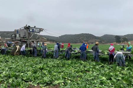 COVID-19 Research Spotlight: Brenda Eskenazi on Risks to California Farmworkers