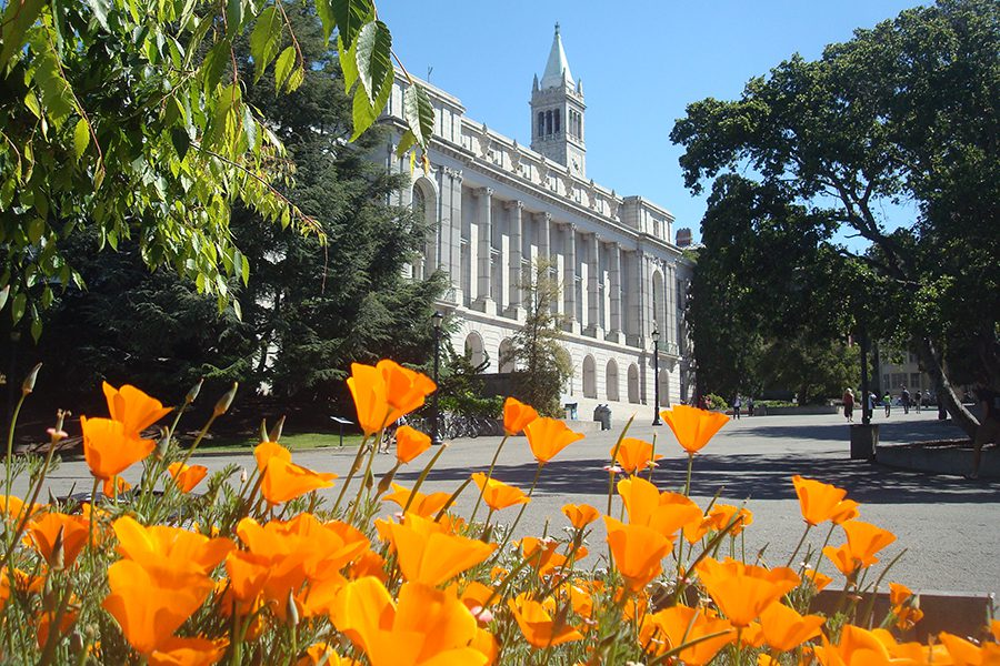 Poppies blossom on the UC Berkeley Campus