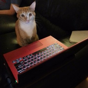 Tigger and laptop