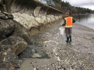 Otras playas de la isla Vashon son declaradas libres de contaminación y seguras para la recolección de mariscos
