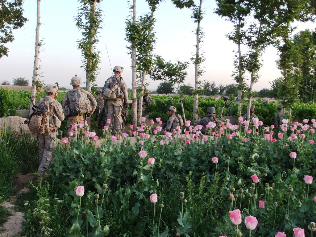 U.S. Occupation Leads to All Time High Afghan Opium Production opium fields16