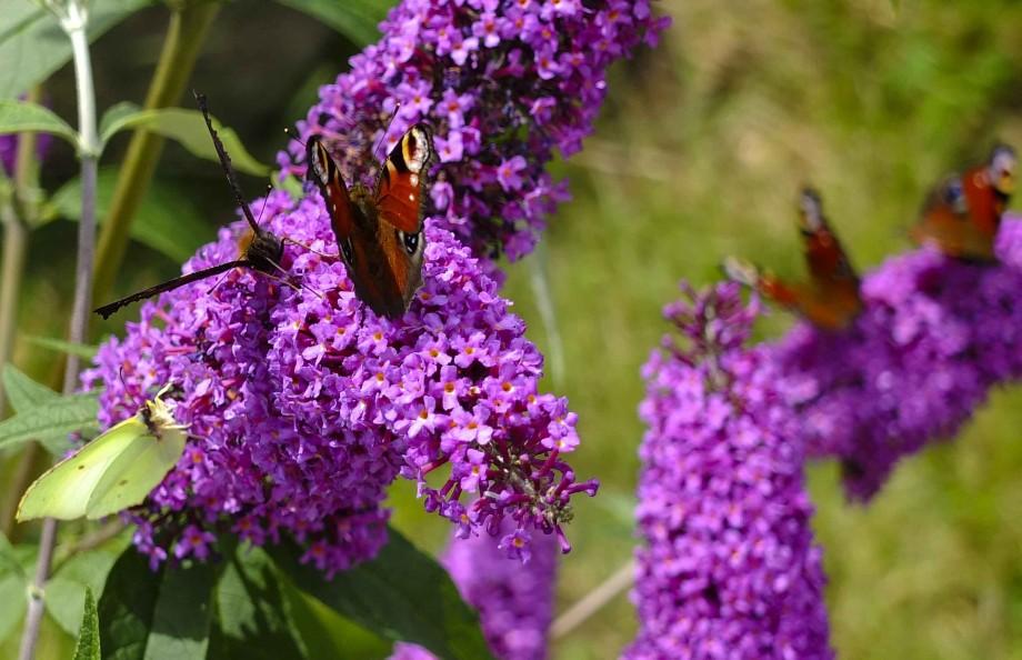 Butterfly winter24_