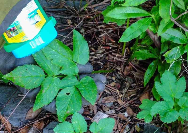 weeds_weekiller_2_