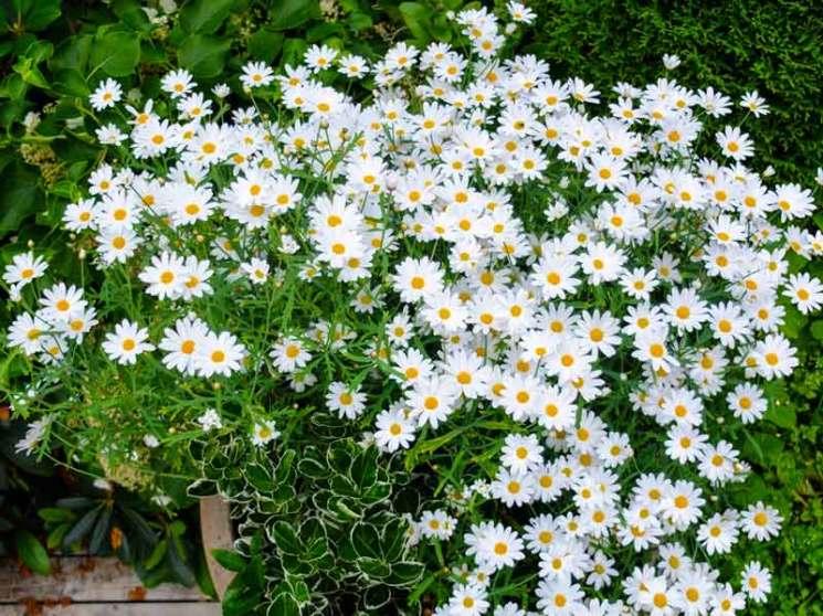 Utplanting mai6_