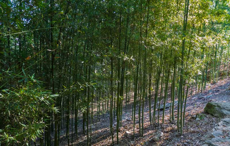 Bambooscreening_
