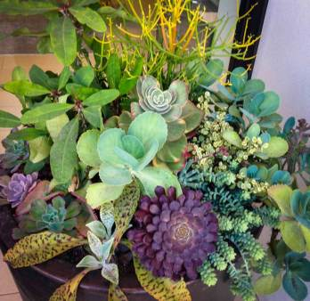 Plant succulents in a container4_
