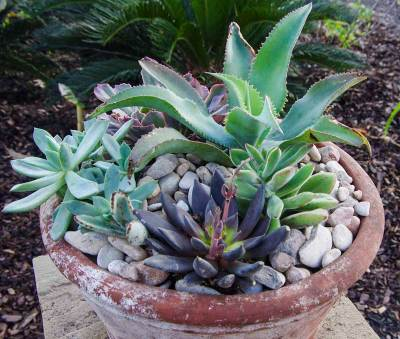 Plant succulents in a container3_