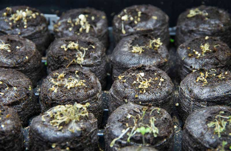 Dead sprouts_20_