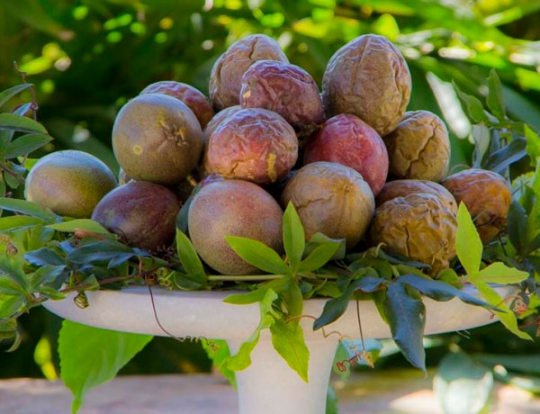 passion fruits_