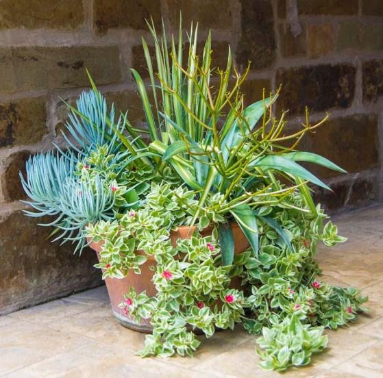 Succulentcontainer june_