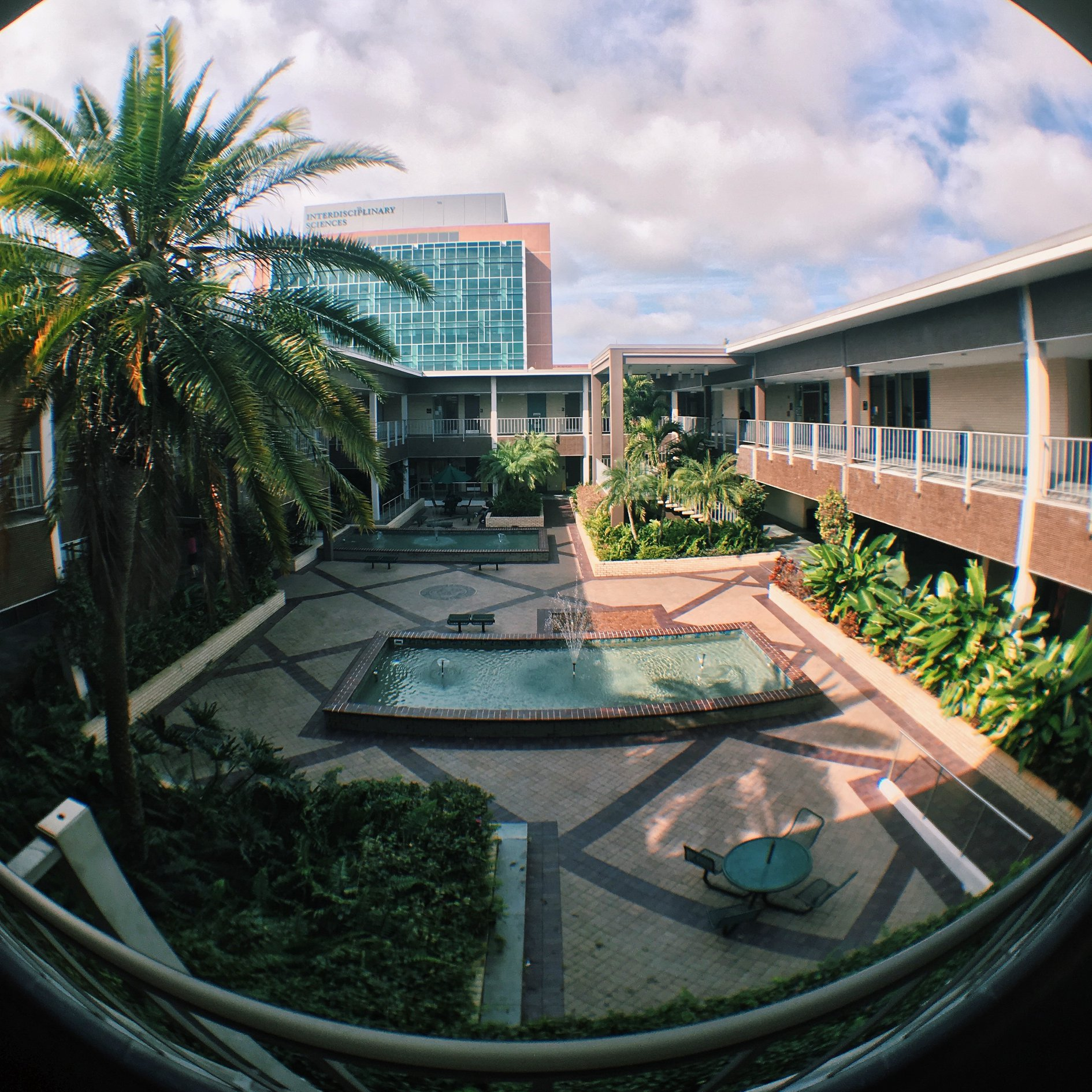 University of South Florida (USF) Honors College: Brand ...