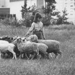 Makke schapen zonder moraal