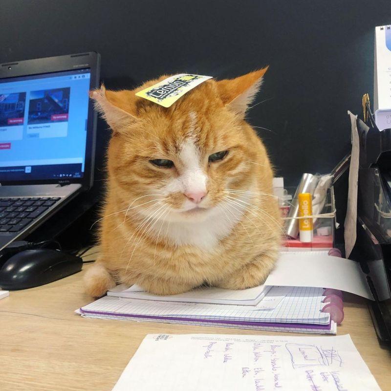 foto van de kat garfield dat deel maakt van ons marketingteam