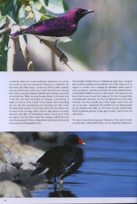 violet-backed_starling_and_common_moorhen
