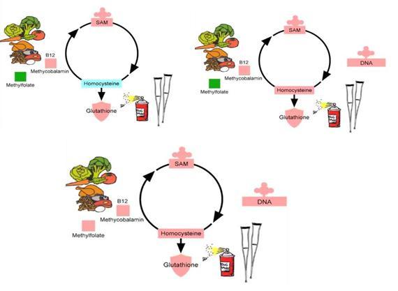 częściowe zahamowanie metylacji tworzą błędne koło i to błędne koło staje się chroniczne.