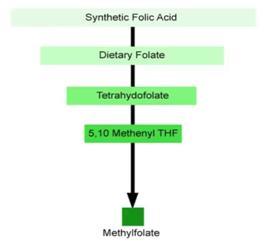 kwas foliowy - metylacja