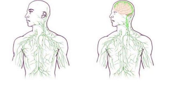 Mapy układu limfatycznego