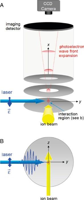 (A) Seitenansicht der Photoelektronen-Abbildungsbaugruppe. Die drei kreisförmigen Elektroden, aus denen die Abbildungslinse für die Geschwindigkeitskarte besteht, sind in Grau dargestellt. Der Vektor des elektrischen Feldes des Lasers, , liegt parallel zur Detektorebene und wird durch den blauen Doppelpfeil angezeigt (senkrecht zur Seitenebene ausgerichtet). Die Photoelektronen-Wellenfront (rot) wird entlang der x-Achse auf den Detektor projiziert. (B) Draufsicht auf den Bereich der Laser-Ionen-Wechselwirkung. Der Laserstrahl (blau) breitet sich in der y-Richtung aus; liegt entlang der z-Achse, parallel zum Ionenstrahl (gelb). Die Elektroden und der Detektor sind parallel zur yz-Ebene.