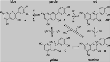 Anthocyanin Compositions in Different Colored Gladio lus