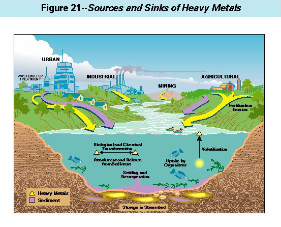 Image result for heavy metals in food chain