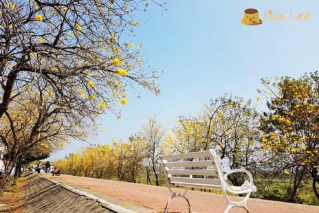【嘉義旅遊】八掌溪畔軍輝橋黃花風鈴木堤防《風鈴木大道》三月黃花瘋市集