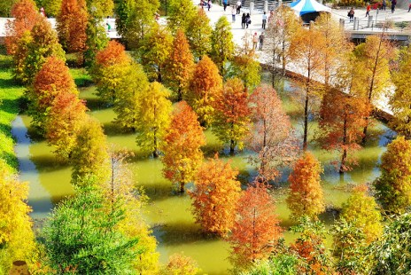 苗栗景點│三灣落羽松秘境》季節限定漸層色.橘綠紅水鏡倒影