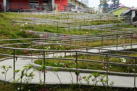 【遊記-雲林】古坑自然生態/繽紛校舍《樟湖生態國民中小學》最美的森林學校