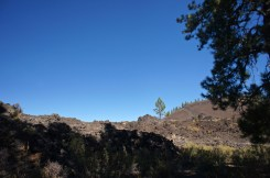 Lone Tree in the Lava