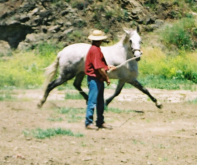 Horse training on the dry river bed, Almachar