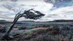 """Videoclip: """"Últimos humanos en Patagonia"""" de Rafael Cheuquelaf"""