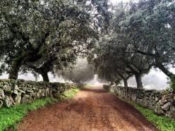 Los campos de Moral bajo la niebla