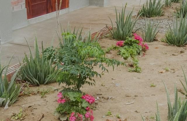 Die Pflänzchen grünen in der Wüste