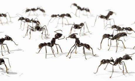 ants-001