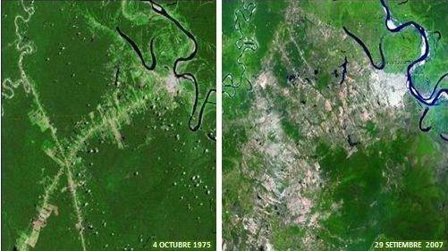 deforestacion.jpg