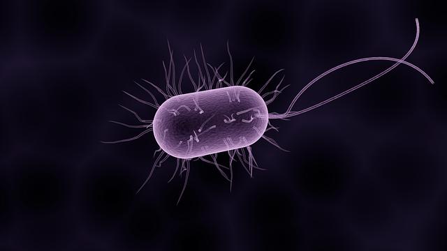 bacteria-1832824_640.png
