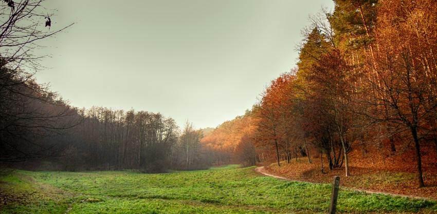 Asturias y sus sabores de otoño