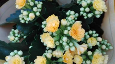 Flor de Mundo