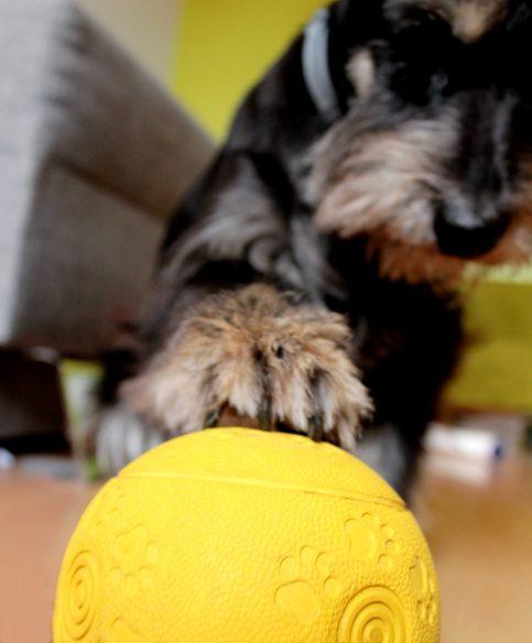 Podwójny gigasukces: wolniejsze jedzenie + jajakolwiek interakcja P. z zabawką