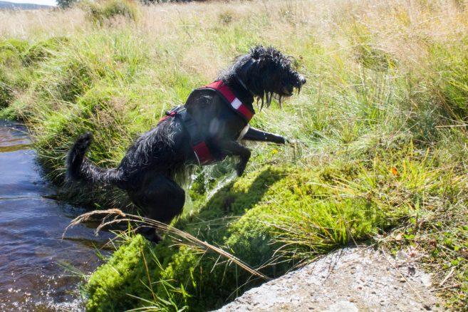 Jeden z niewielu potoków na trasie. Miejsc gdzie woda być powinna było sporo ale ku rozpaczy Bu, wszytkie wyschnięte. Dobrze wziąć pod uwagę taką sytuację planując ilość wody dla psa zabieranej na szlak.